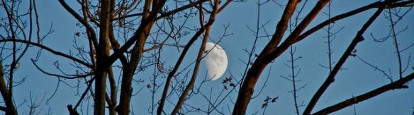 Autumn_Moon_02