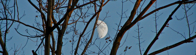 Autumn_Moon_02