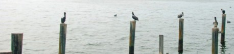 cropped-cropped-cropped-pelicans_on_pilings_01_edited-21.jpg