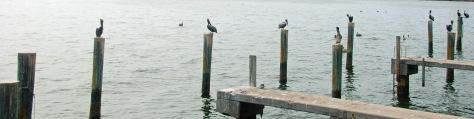 Pelicans_on_Pilings_01_edited-1