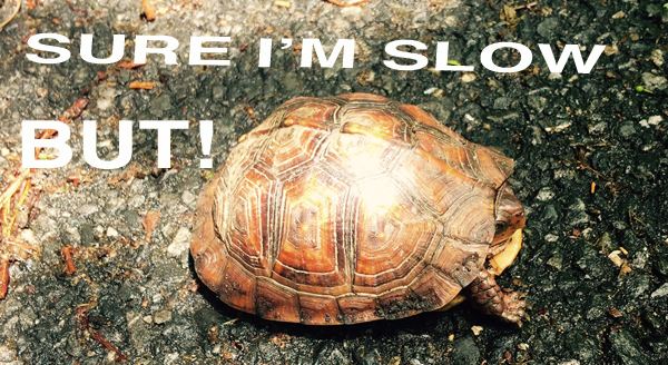 Sure_im_slow__Turtle_01