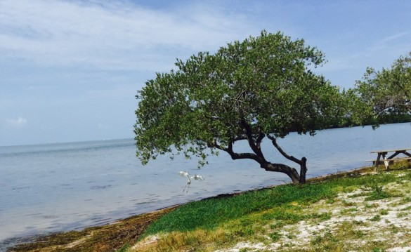 State Park Beach in the Keys